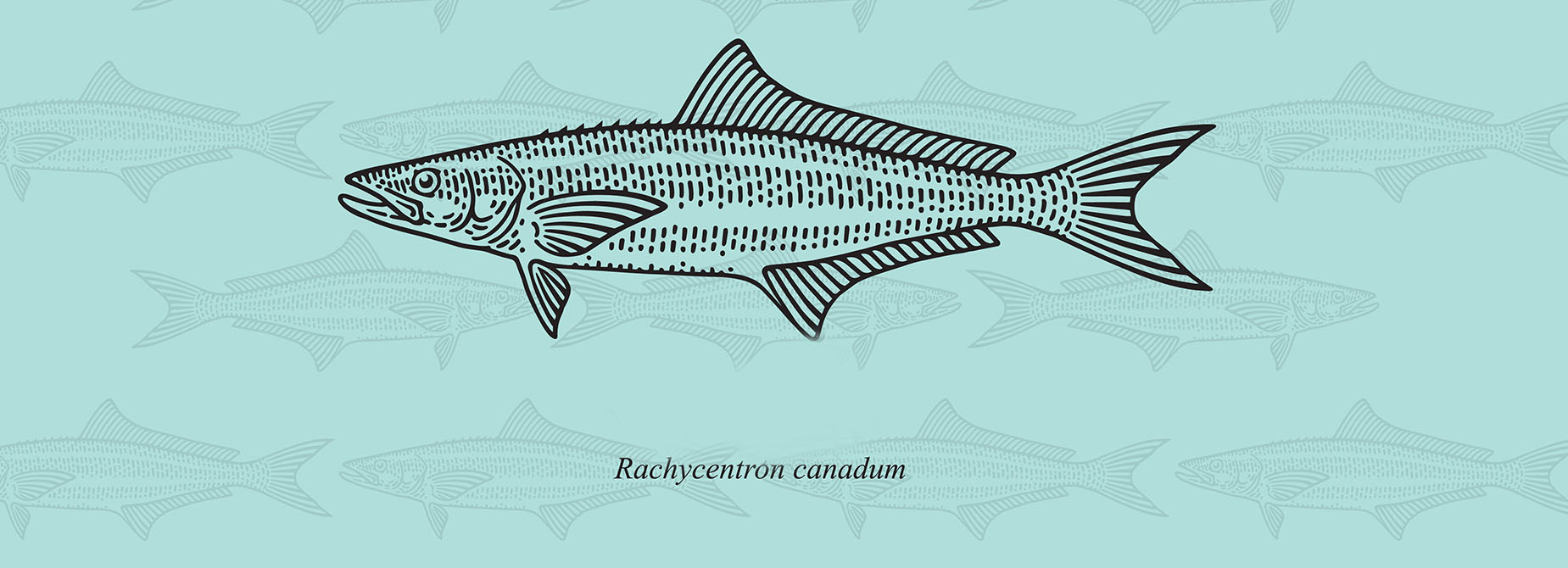 Rendering of a Cobia Fish